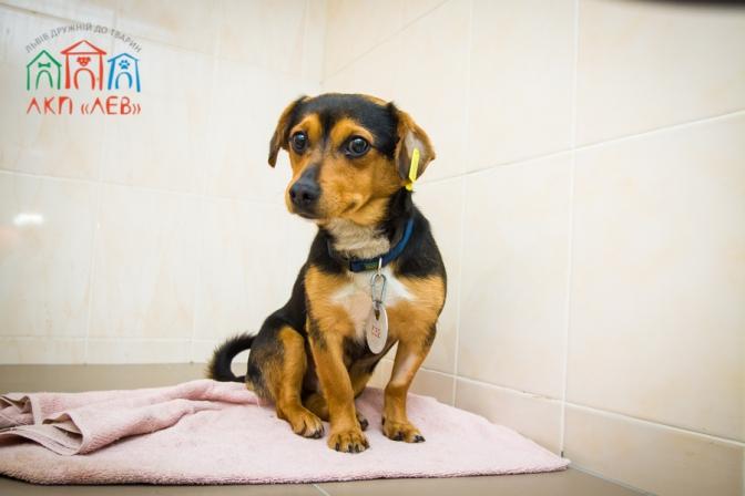 Коммунальная ветеринарная клиника ЛКП «Лев» зарабатывает на домашних животных для помощи бездомным