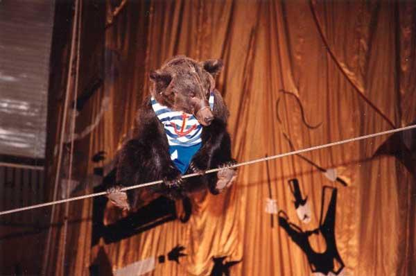 медведица на канате