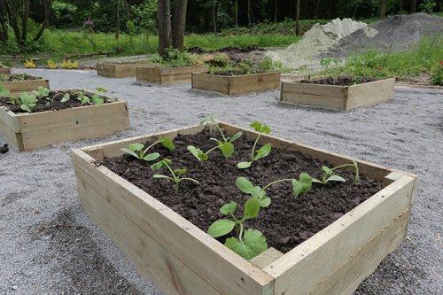Во львовском парке открыли социальный овощной огород