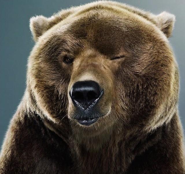 Медвежий санаторий