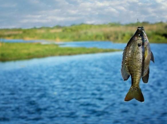 Ловля На Плавающую Приманку Без Поплавка